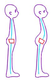 骨盤前傾図解